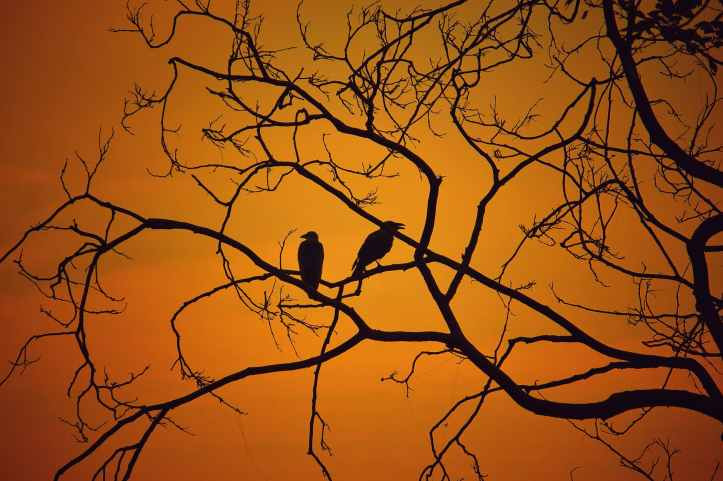 backlit birds branches dawn